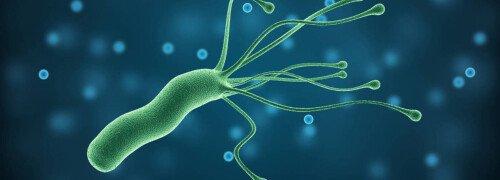 Бактерия хеликобактер пилори — что нужно знать?